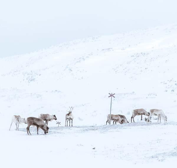 skarvruet hotel tänndalen funäsdalen funäsjällen härjedalen jämtland highland winter scooter reindeer
